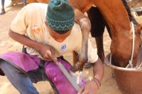 Farriery workshop, Senegal