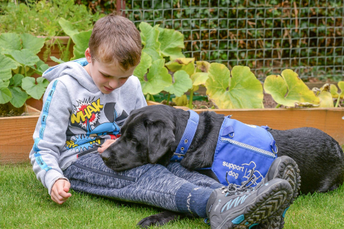Support Dogs autism assistance dog programme